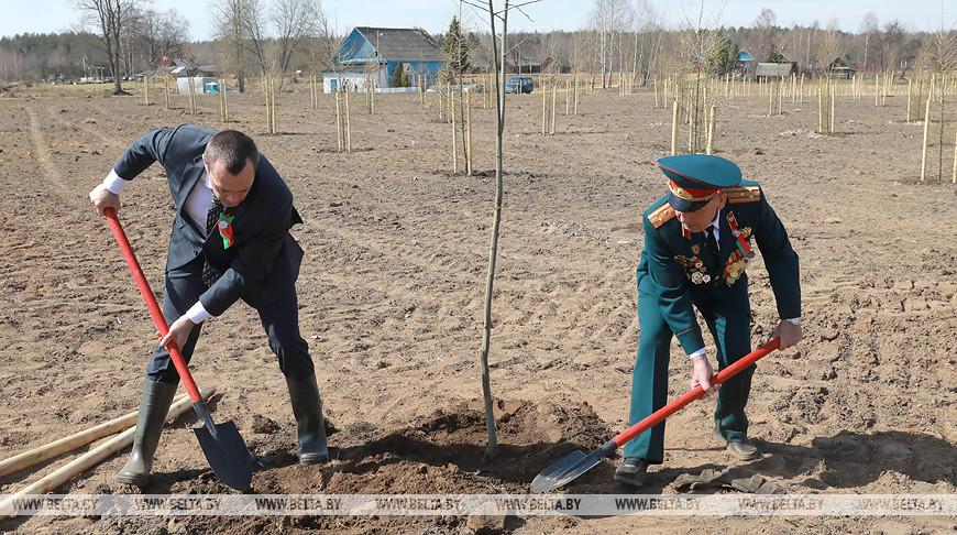 Более 1 тыс. деревьев посадят на территории мемориального комплекса в Кировском районе
