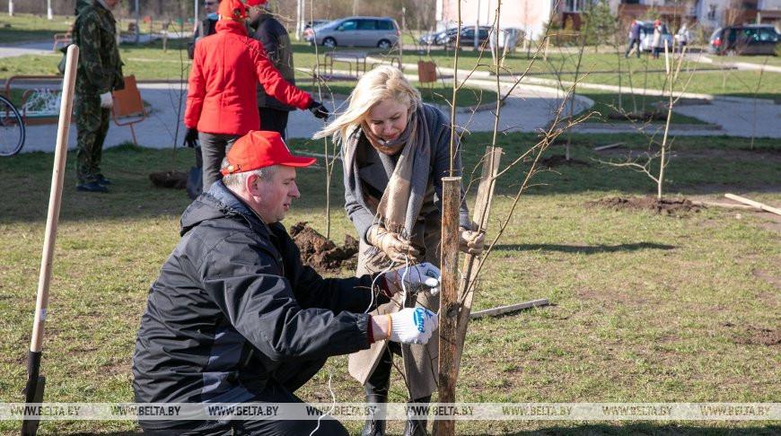 В витебском микрорайоне во время экоакции высадили более сотни деревьев