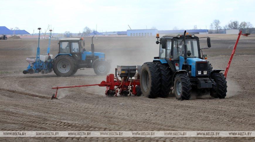 В Мозырском районе сеют кукурузу