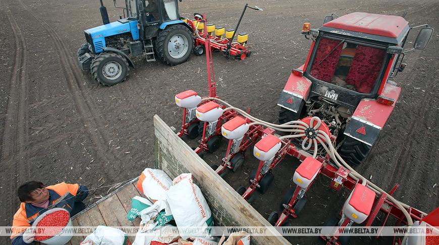 Сев кукурузы идет в Гомельском районе