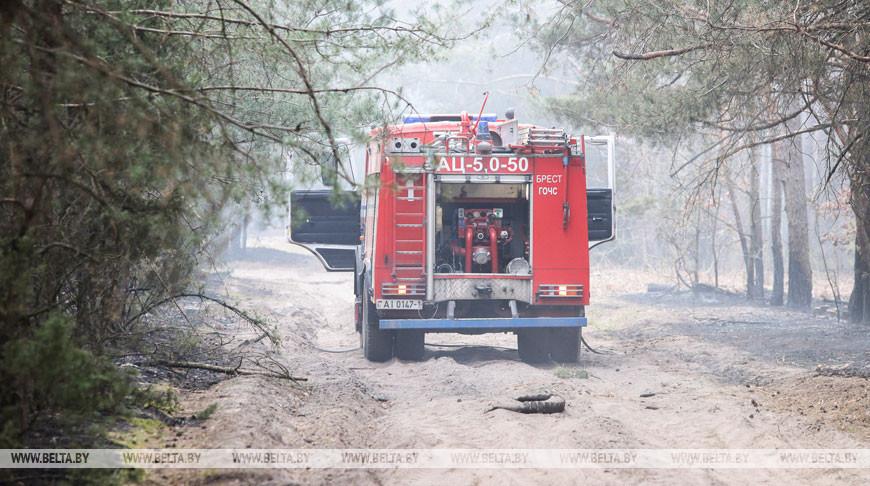 Лесной пожар на окраине Бреста ликвидирован