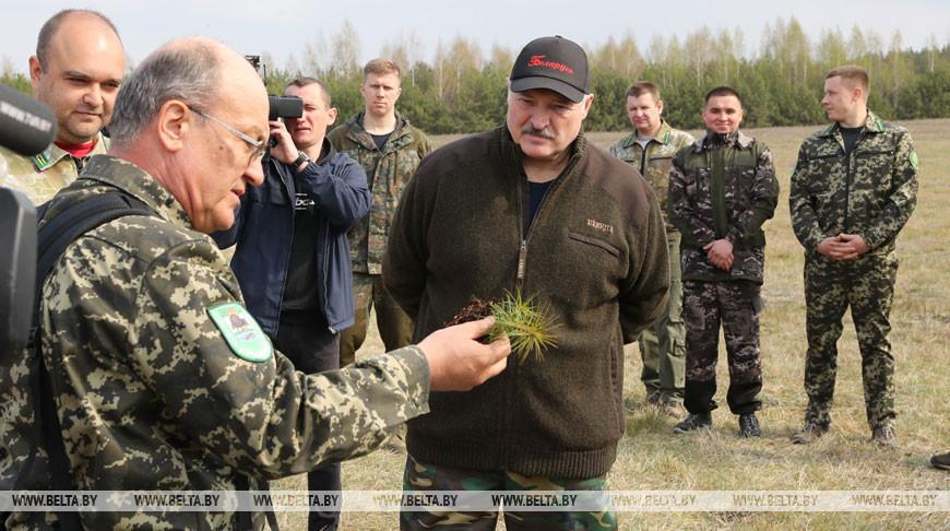 """Лукашенко во время субботника посадил деревья в Национальном парке """"Припятский"""""""