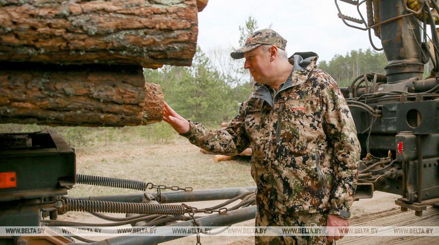 Все лесхозы Беларуси в 2021 году будут работать в электронной системе учета древесины