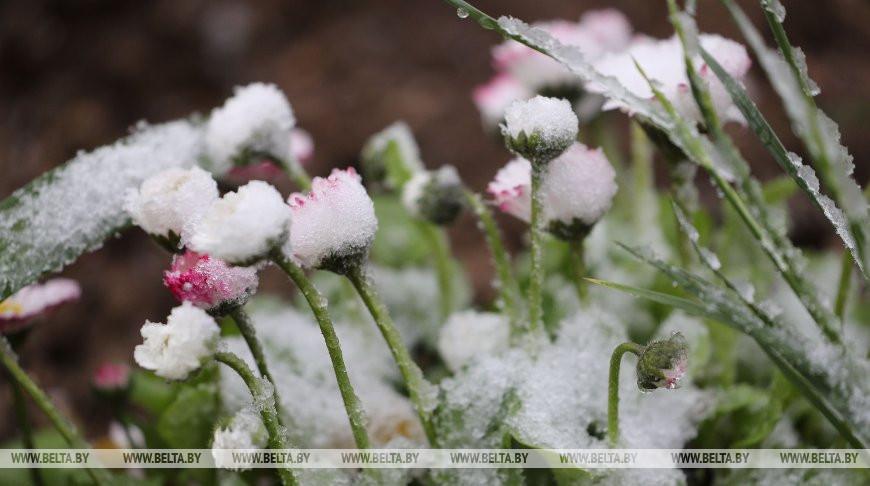 Снег выпал в Гродно