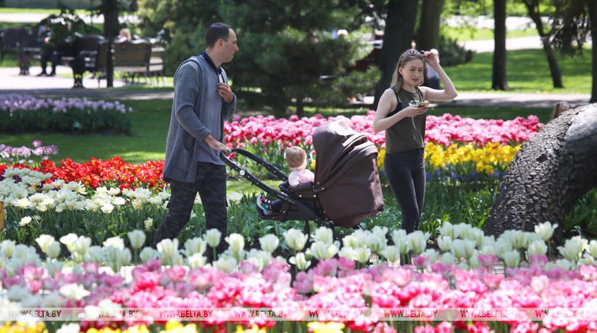 35 тыс. тюльпанов высажены на территории Гомельского дворцово-паркового ансамбля