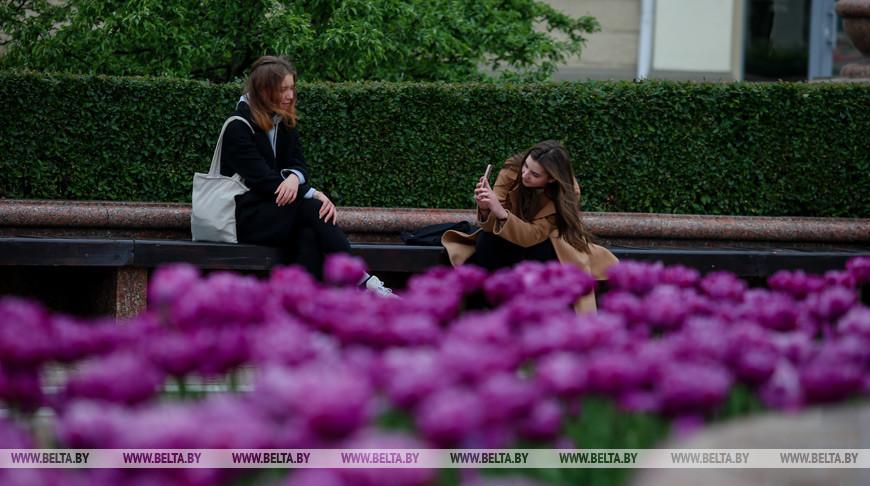 В Минске цветут тюльпаны