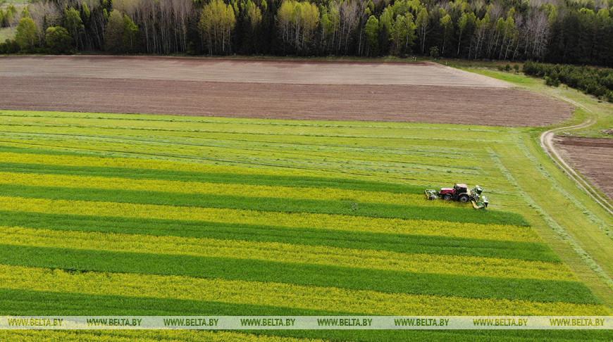 В Гродненской области заканчивают укос озимой сурепицы и озимой ржи