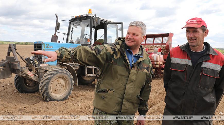 Посадка картофеля идет в Витебском районе