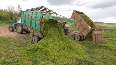 В Могилевской области началась заготовка кормов