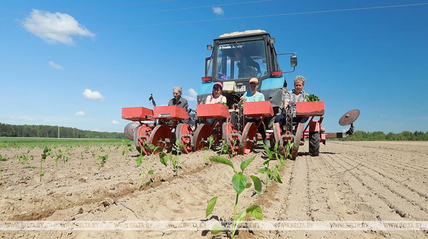 Фермерское хозяйство Михаила Зайцева в Могилевском районе