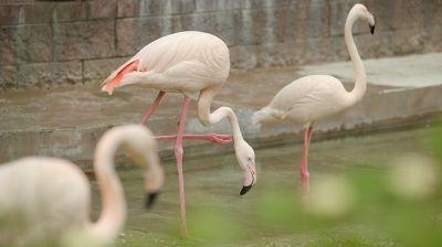 У птиц в Минском зоопарке сезонное новоселье