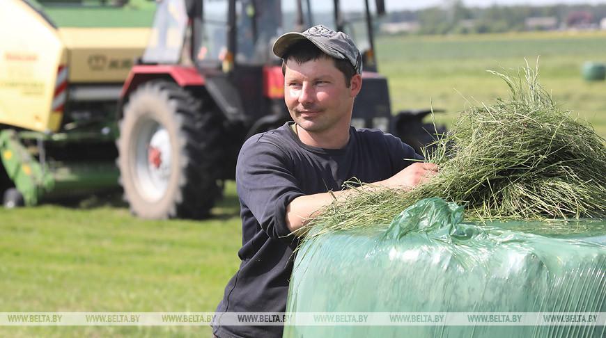 Заготовка травянистых кормов идет в Бобруйском районе