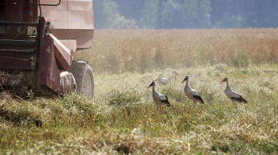 В Гомельской области приступили к уборке озимого рапса