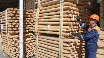 За полгода Петриковский лесхоз экспортировал 7,9 тыс. куб.м пиломатериалов