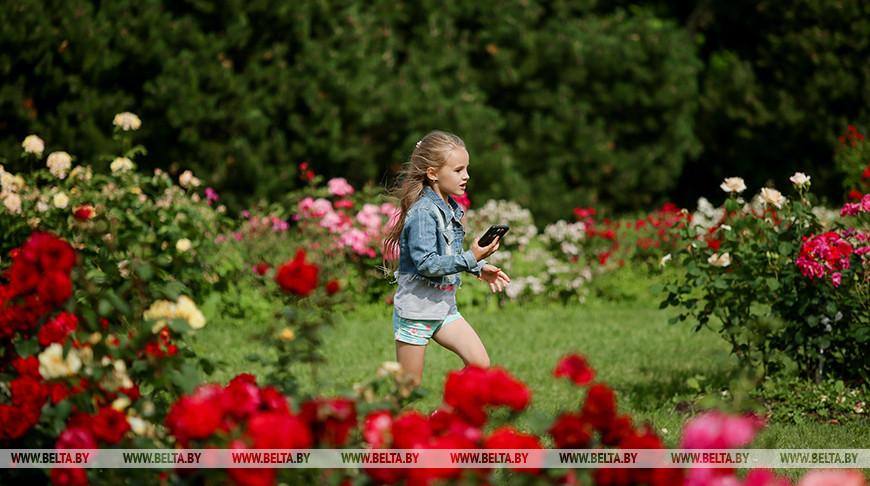 В Ботаническом саду цветут розы