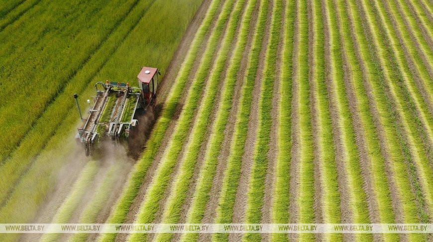 В Гродненской области приступили к уборке льна