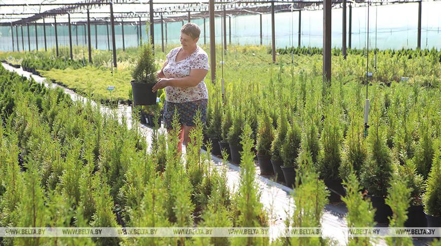 Гомельский опытный лесхоз признан лучшим по итогам 2019 года