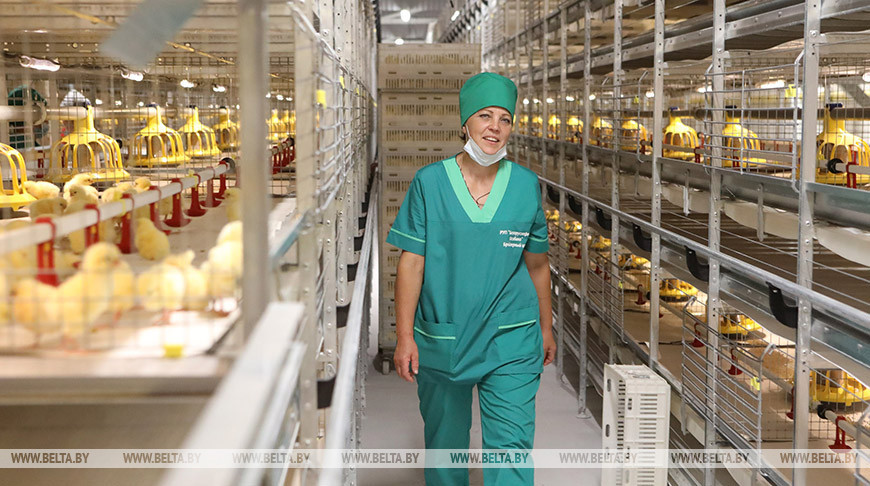 """Модернизированные птичники """"Белоруснефть-Особино"""" вдвое увеличат мощности по производству мяса"""