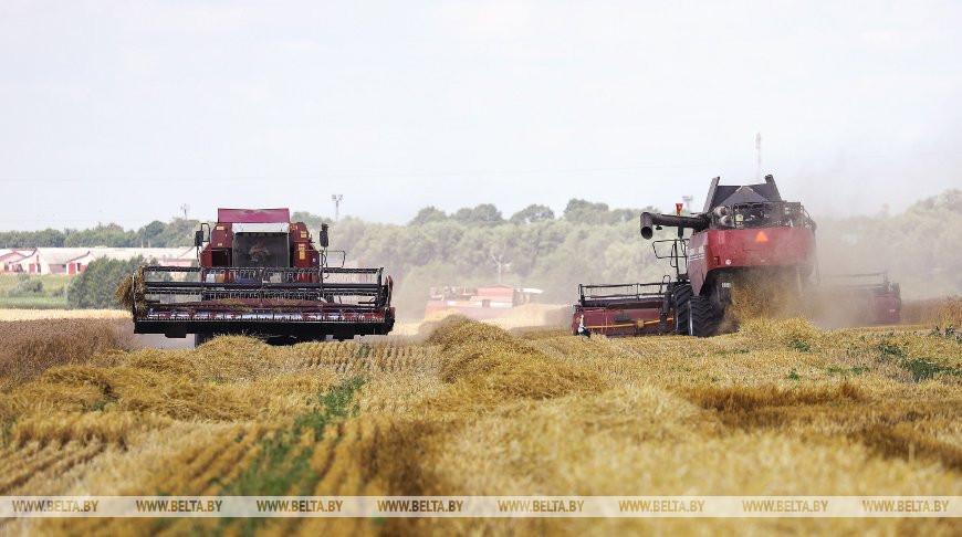 Семейный экипаж из Каменецкого района намолотил более 2 тыс. т зерна