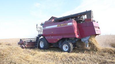 Завершается уборка зерновых в Гомельском районе