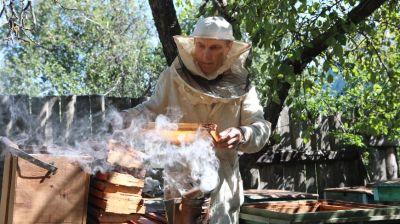 Гомельские пчеловоды собирают липовый мед