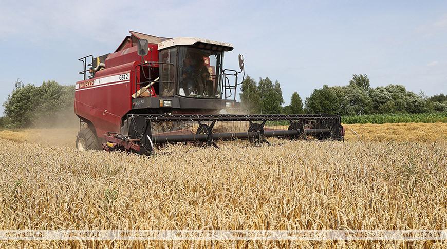 Уборка зерновых идет в Дубровенском районе