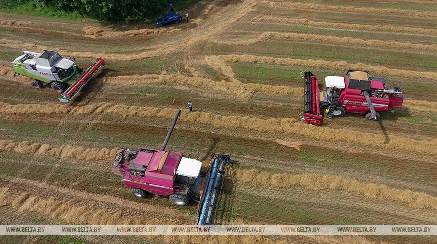Уборка зерновых идет в Смолевичском районе