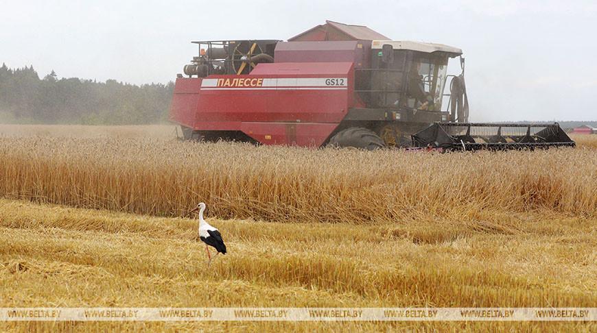 Уборка зерновых идет в Круглянском районе