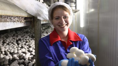 Предприятие по выращиванию шампиньонов торжественно открыли в Толочинском районе