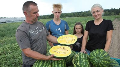 Фермер Игорь Гринько из Гомельского района выращивает арбузы