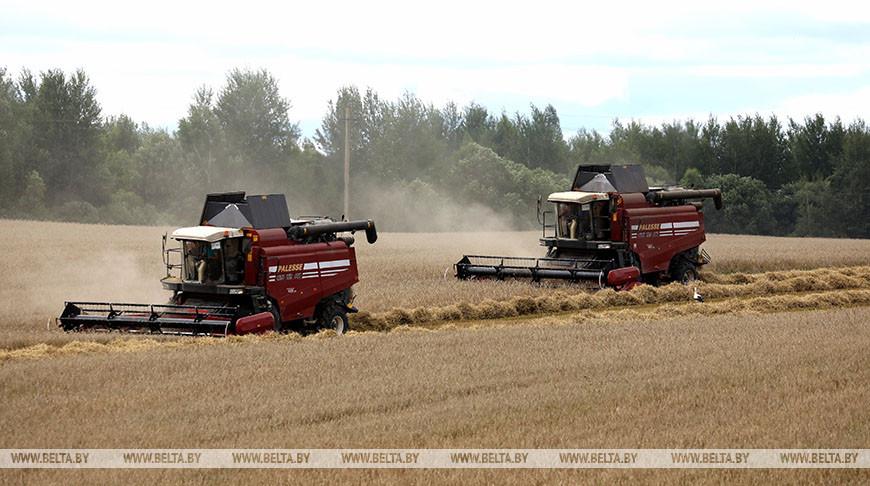 Уборка зерновых в Витебском районе