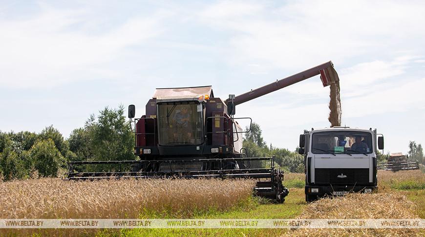 Аграрии Витебской области убрали почти 70% площадей зерновых