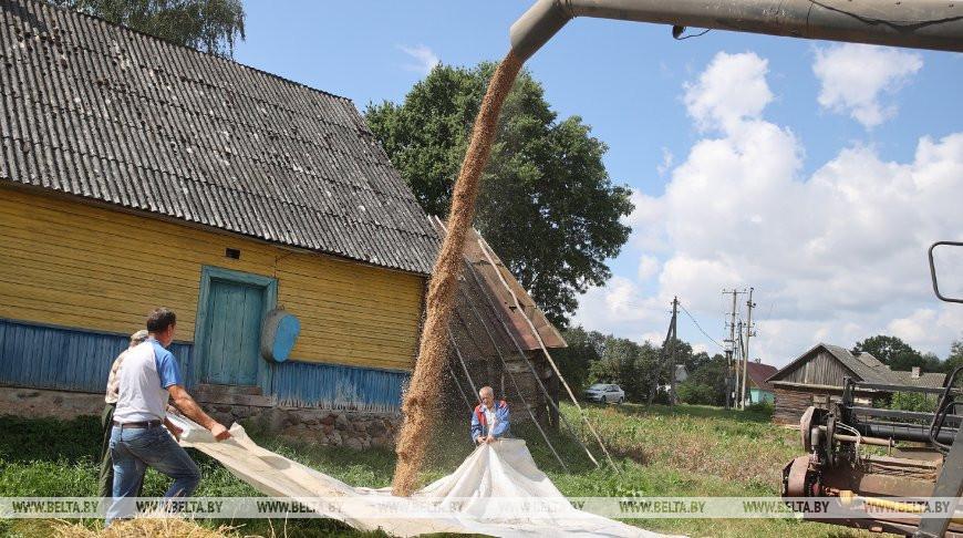 Уборка зерновых идет на приусадебных участках в Гродненском районе