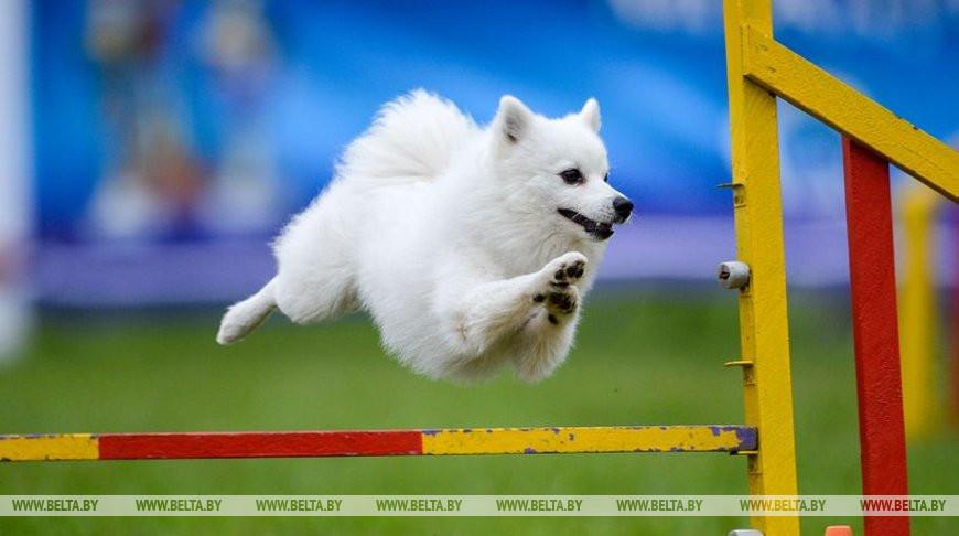 Соревнования по аджилити прошли на Международной выставке собак под Минском