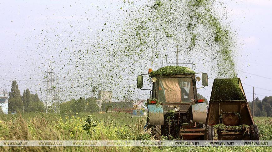 В Гомельской области идет уборка лука
