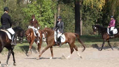 Открытый чемпионат и первенство области по конному спорту проходят в Гомеле