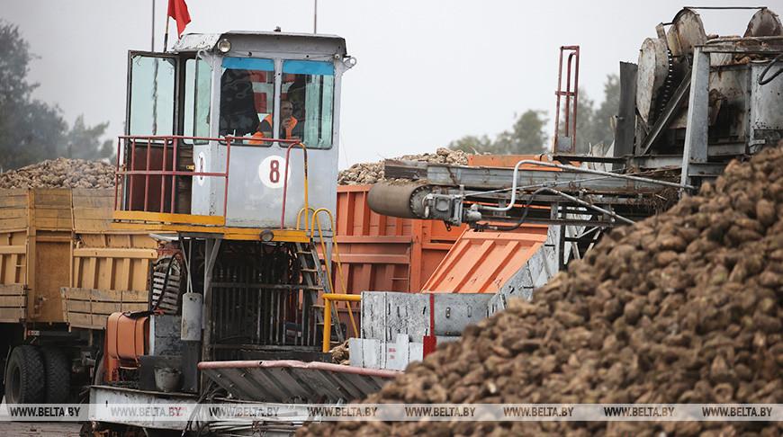 Скидельский комбинат планирует переработать 950 тыс. т сахарной свеклы