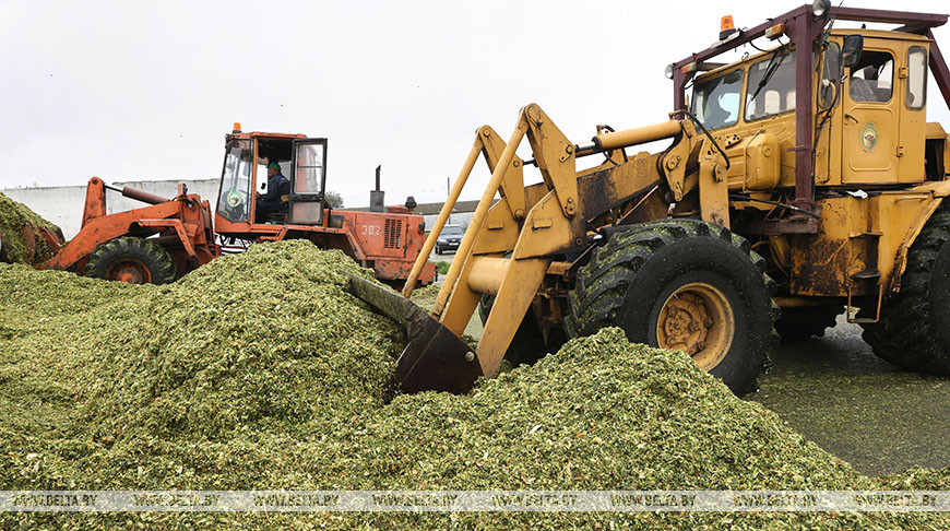 Уборка кукурузы идет в Оршанском районе