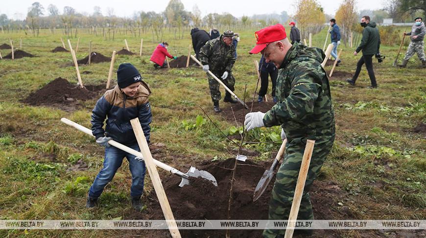 Фруктовый сад заложили во время городского субботника в Могилеве