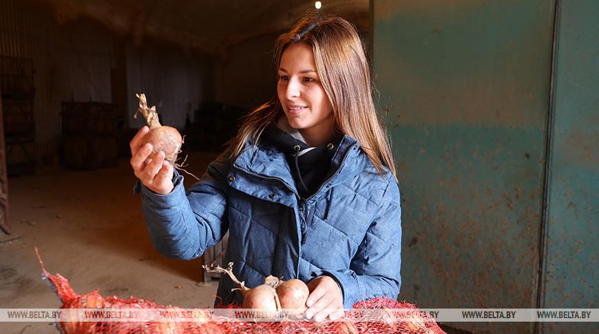 Овощи закладывают на хранение в стабфонд Могилевской области