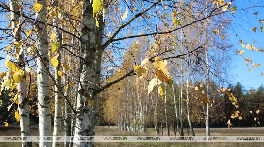 Осень в Гомельской области