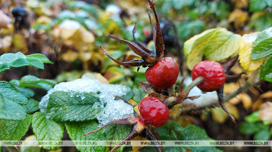 В Минске выпал первый снег