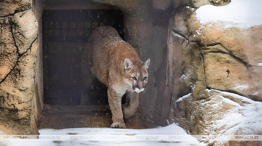 Минский зоопарк готовится к зиме