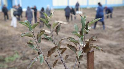 В Брагинском районе заложили яблоневый сад