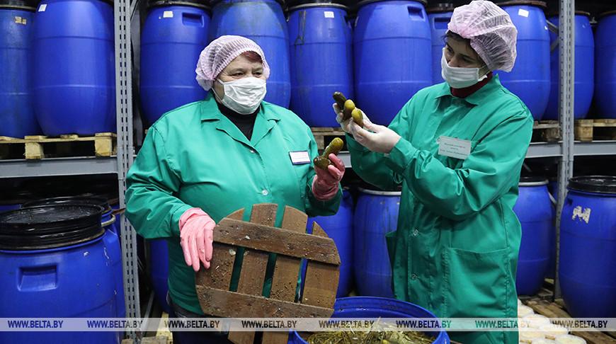 Работники райпо из Бобруйска заготавливают соленья на зиму