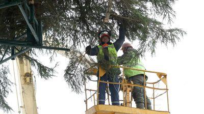 Новогоднюю елку устанавливают в Могилеве