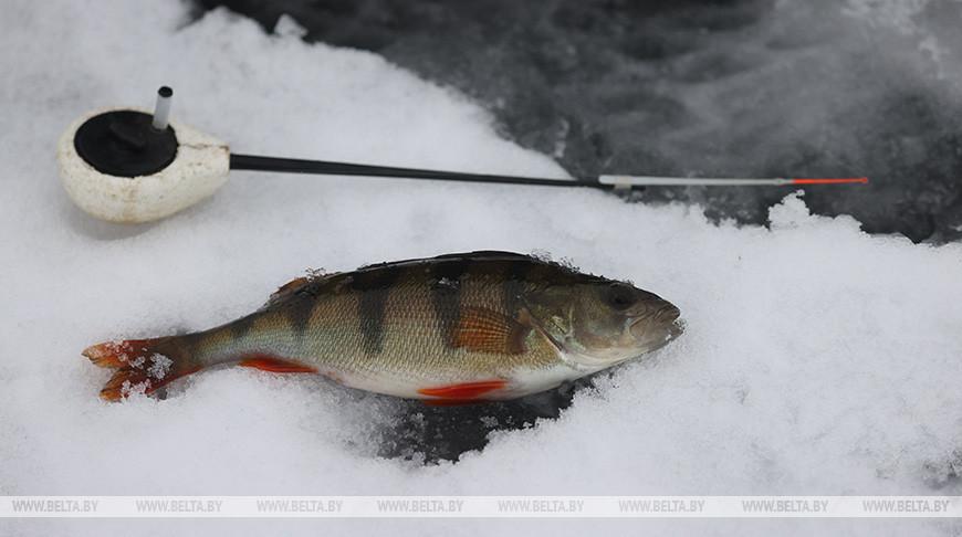 Зимняя рыбалка в Витебске