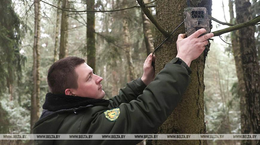 В Могилевской области усилят контроль за незаконной вырубкой елей