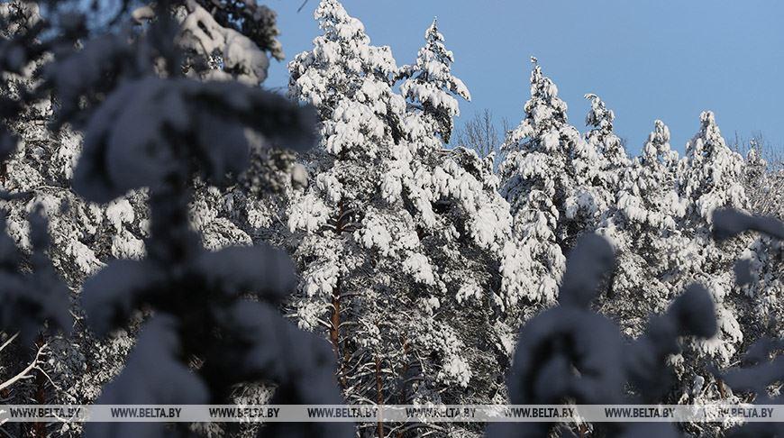 Снежный лес в лучах солнца