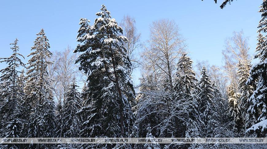 Зима в Кормянском районе